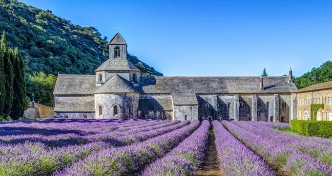 Thiên đường oải hương tràn sắc tím giữa lòng Provence - 4