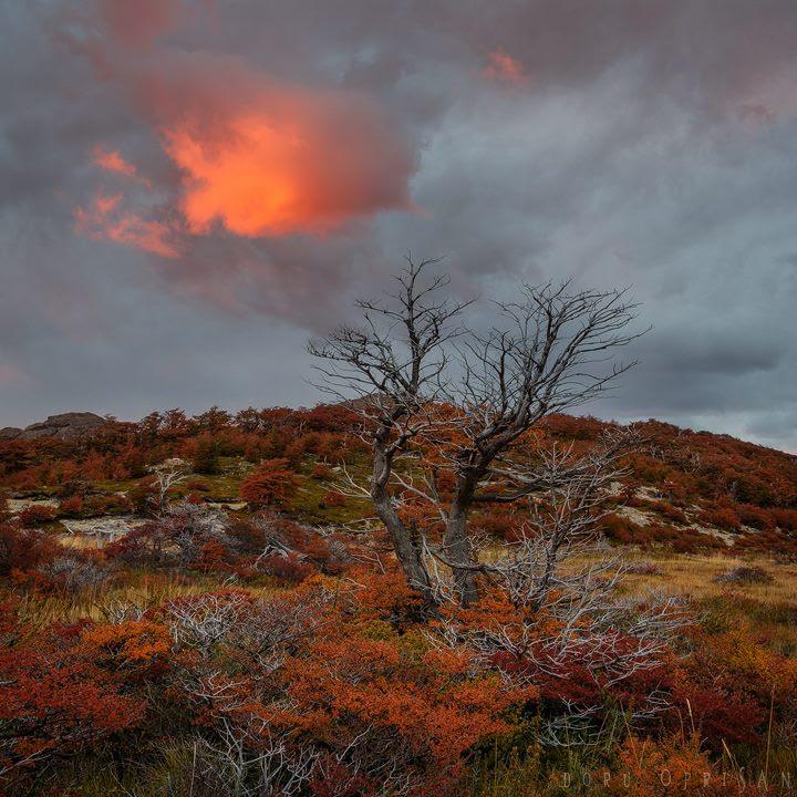 Chiêm ngưỡng Patagonia – Bức tranh tráng lệ đầy sắc màu ở nơi tận cùng thế giới - 15