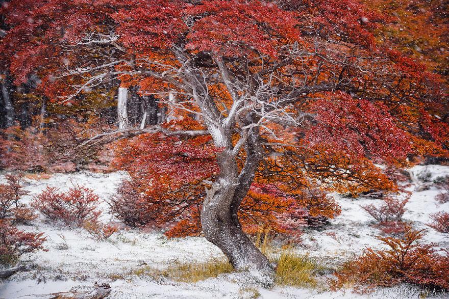 Chiêm ngưỡng Patagonia – Bức tranh tráng lệ đầy sắc màu ở nơi tận cùng thế giới - 10