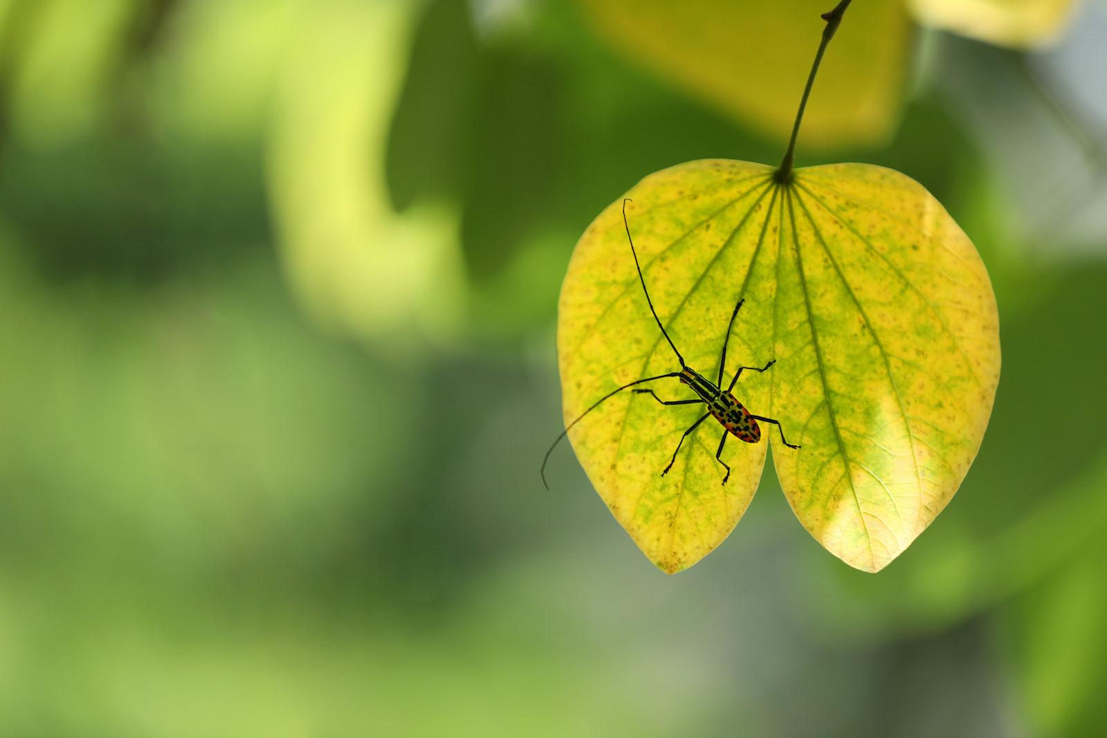 Những khoảnh khắc mùa thu Hà Nội lay động lòng người - 10