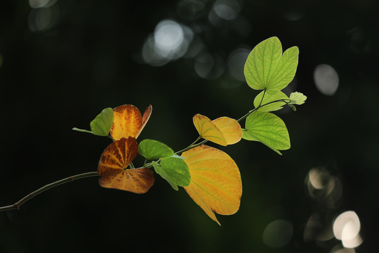 Những khoảnh khắc mùa thu Hà Nội lay động lòng người - 11