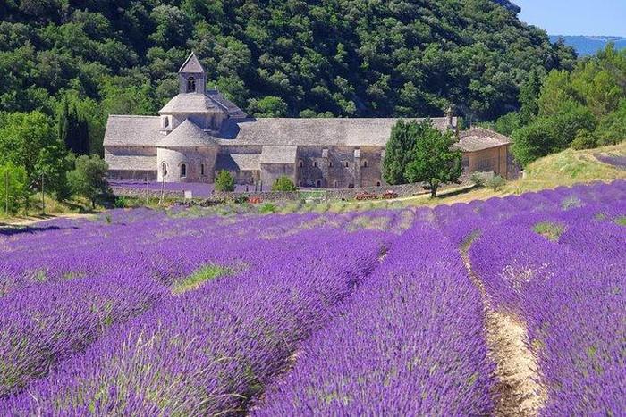 Lạc giữa sắc tím mộng mơ của cánh đồng oải hương lớn nhất nước Pháp - 1