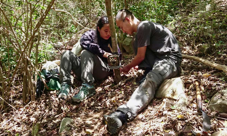 Việt Nam: Chụp được ảnh loài cheo cheo tưởng tuyệt chủng gần 30 năm qua - 2