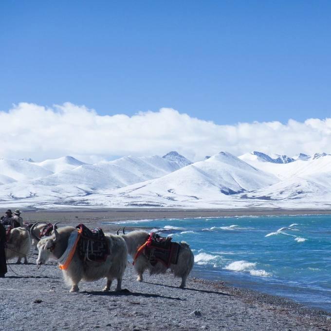 Tây Tạng phủ tuyết trắng trong mùa đông - 2