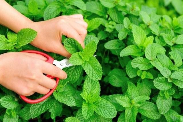 Ích lợi của rau xanh với sức khỏe - 9