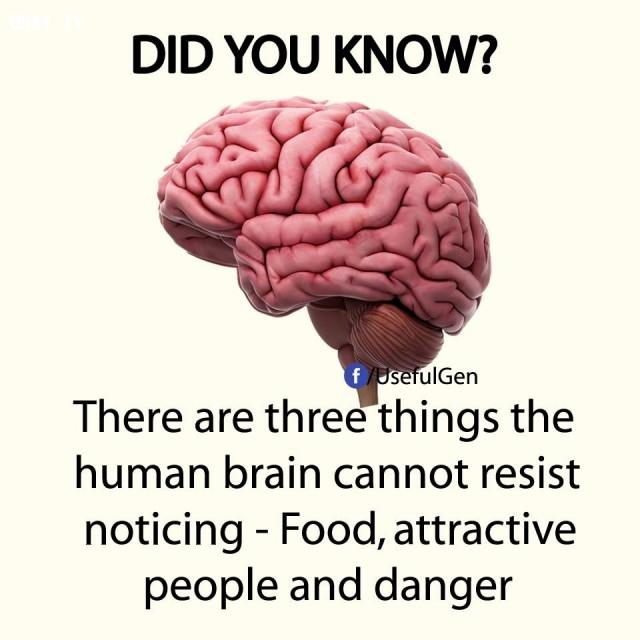 9 sự thật vô cùng thú vị có thể bạn chưa biết. - 5