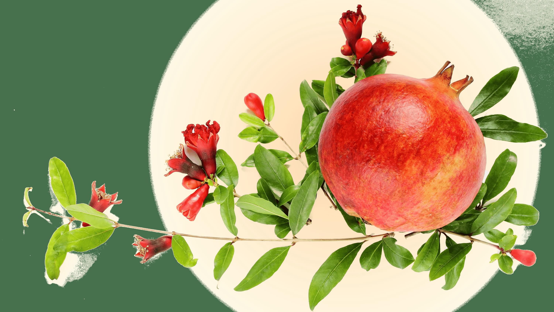 Ý nghĩa các loại quả trong mâm ngũ quả - 7
