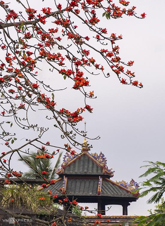 Huế mùa hoa gạo - 3
