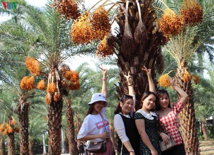 Chiêm ngưỡng vẻ đẹp của vườn chà là lớn nhất miền Tây - 9