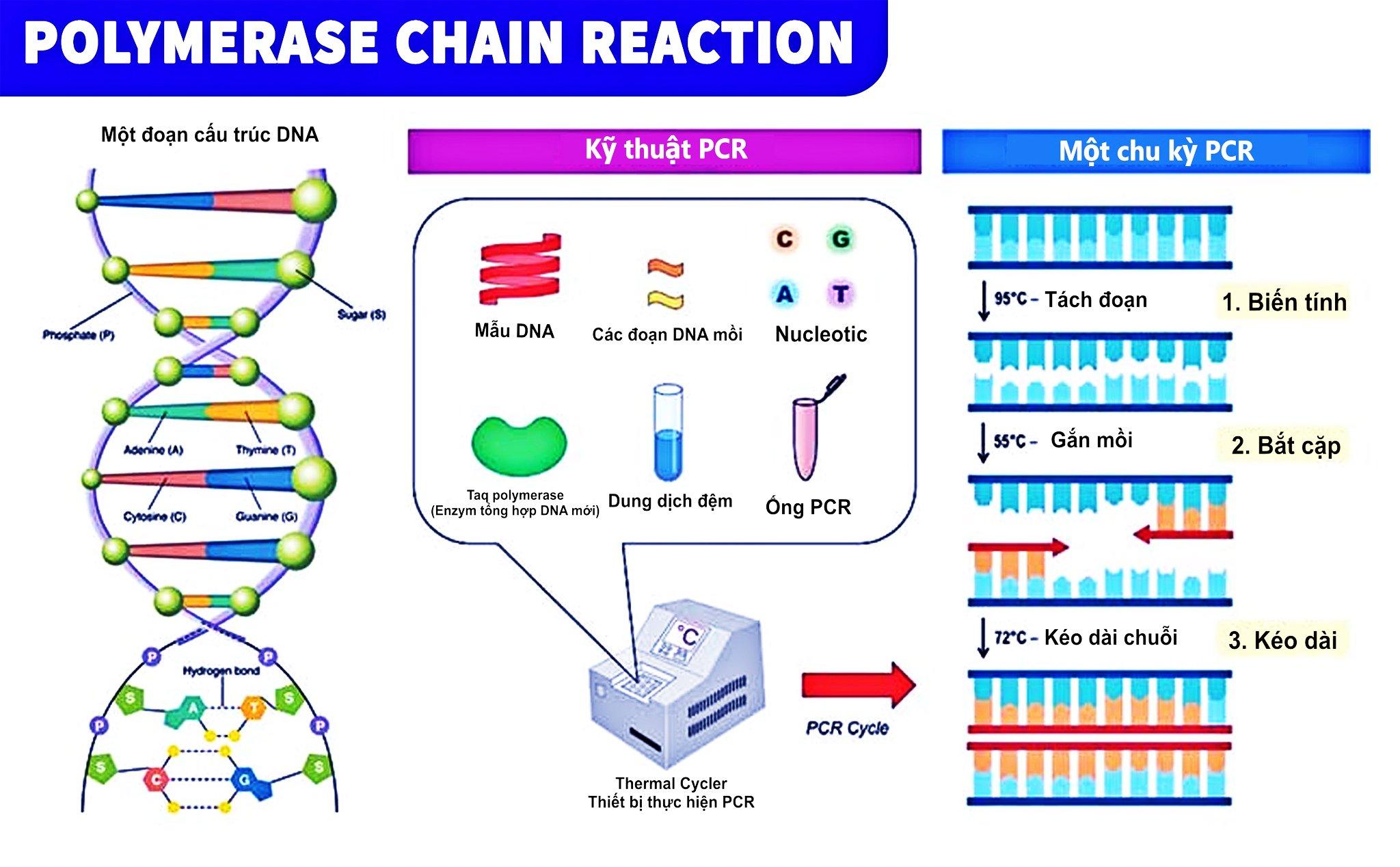 Xét nghiệm COVID-19 bằng PCR là gì và người ta đã tạo ra nó như thế nào? - 4