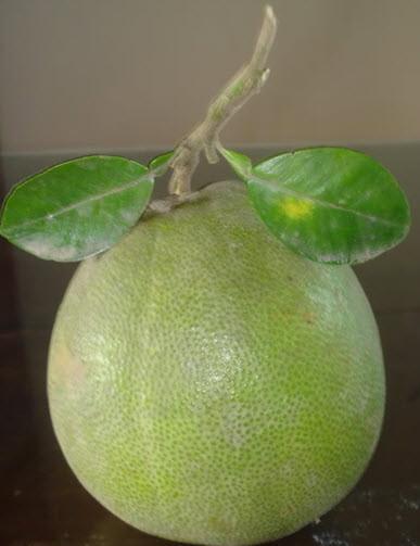 Đầu năm ăn quả thanh yên - 8