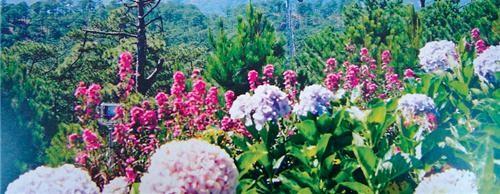 Câu chuyện trồng hoa - 7