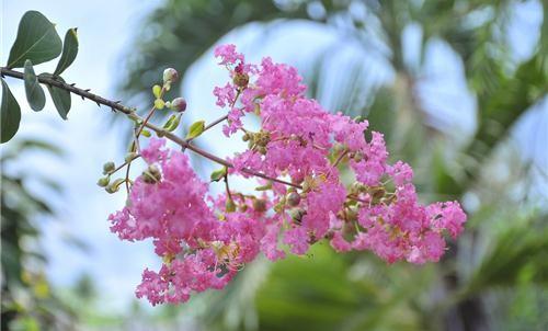 Câu chuyện trồng hoa - 9