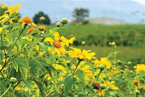 Câu chuyện trồng hoa - 5
