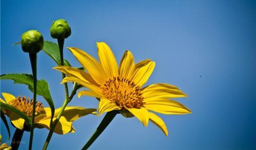 Câu chuyện trồng hoa - 6