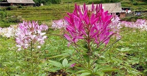 Câu chuyện trồng hoa - 13