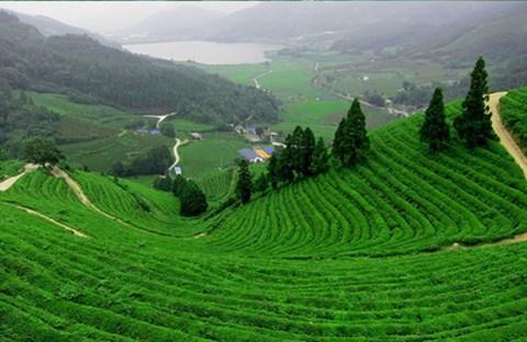 Gió đồi tây - Tống Ngọc Minh
