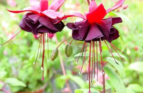 2. Về loài hoa chợt nở trong đời - Diệu Hiền & Xuân Trường